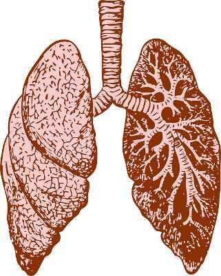 Stoffwechsel anregen durch richtiges Atmen