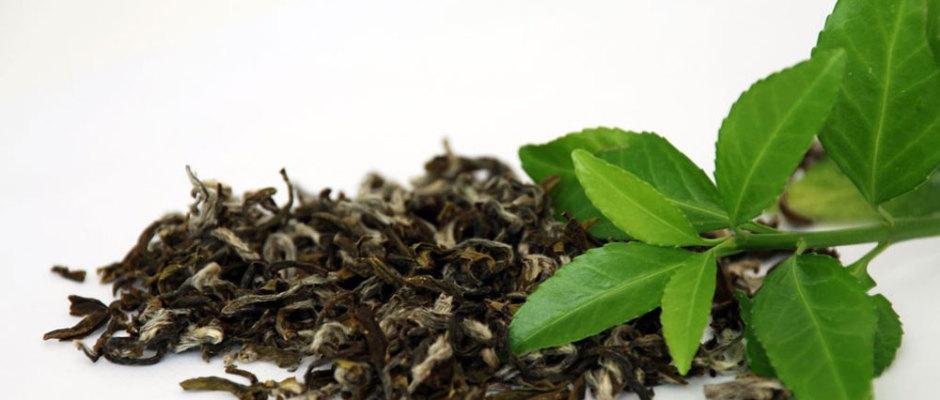 Grüner Tee als Unterstützung beim Abnehmen