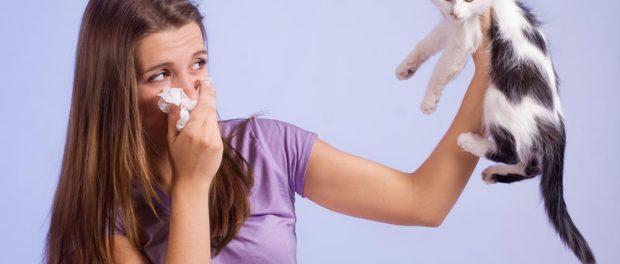 Katzenhaarallergie